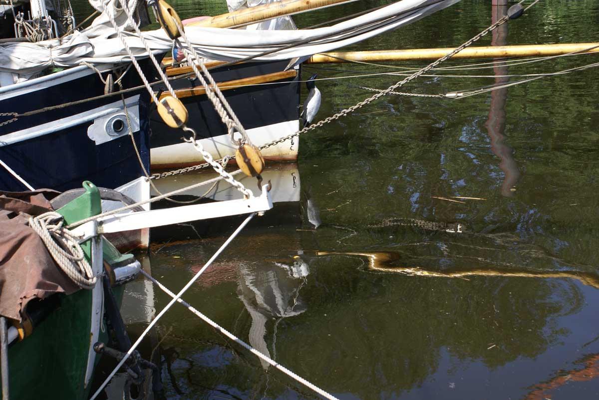 Gaffelgemeinschaft Boote